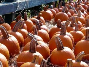 Pumpkins at Plants for All Seasons 5165 Louetta Spring TX 77379