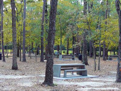 Mercer arboretum spring texas