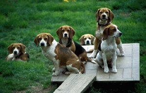 Dog Parks Spring TX
