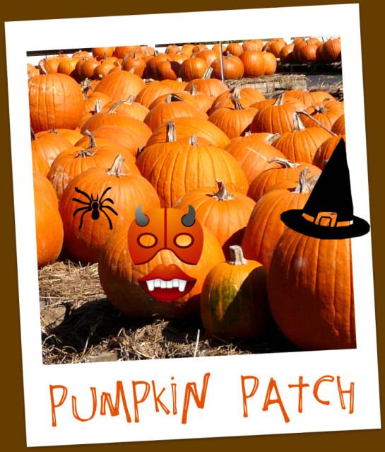 Plants for all seasons Pumpkin Patch