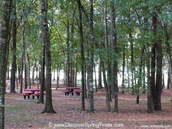 Devonshire Woods