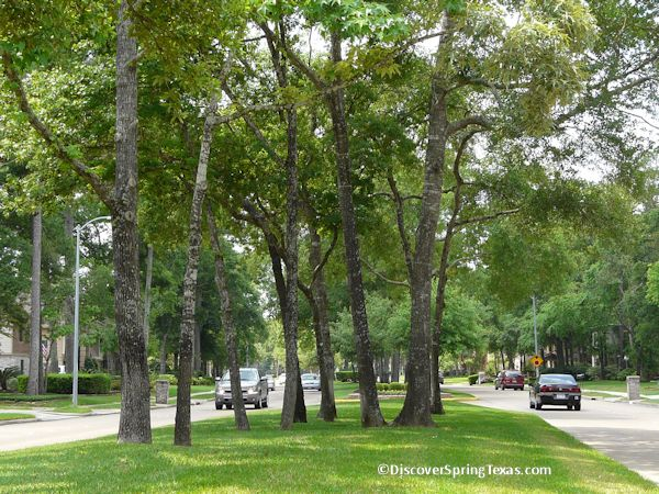 Cypresswood Spring Texas