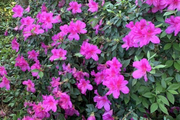 17831 English Ivy Ln Spring TX 77379