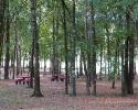 Devonshire Woods park