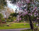 Mercer Botanic Gardens in Spring