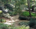 Deep foliage at Mercer Gardens