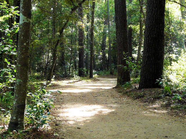 Discover Mercer Arboretum Botanic Gardens Spring Texas Real Estate Homes For Sale Spring