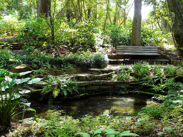 Discover Mercer Arboretum Amp Botanic Gardens Spring Texas