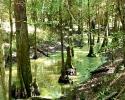 mercer-arboretum-bald-cypress_0.jpg