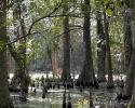 mercer-arboretum-hickory-bog.jpg