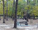 mercer-arboretum-picnic-tables.jpg