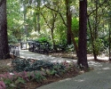 mercer-arboretum-trail.jpg