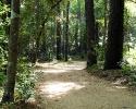 mercer-arboretum-trails.jpg