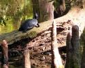 mercer-arboretum-turtle.jpg